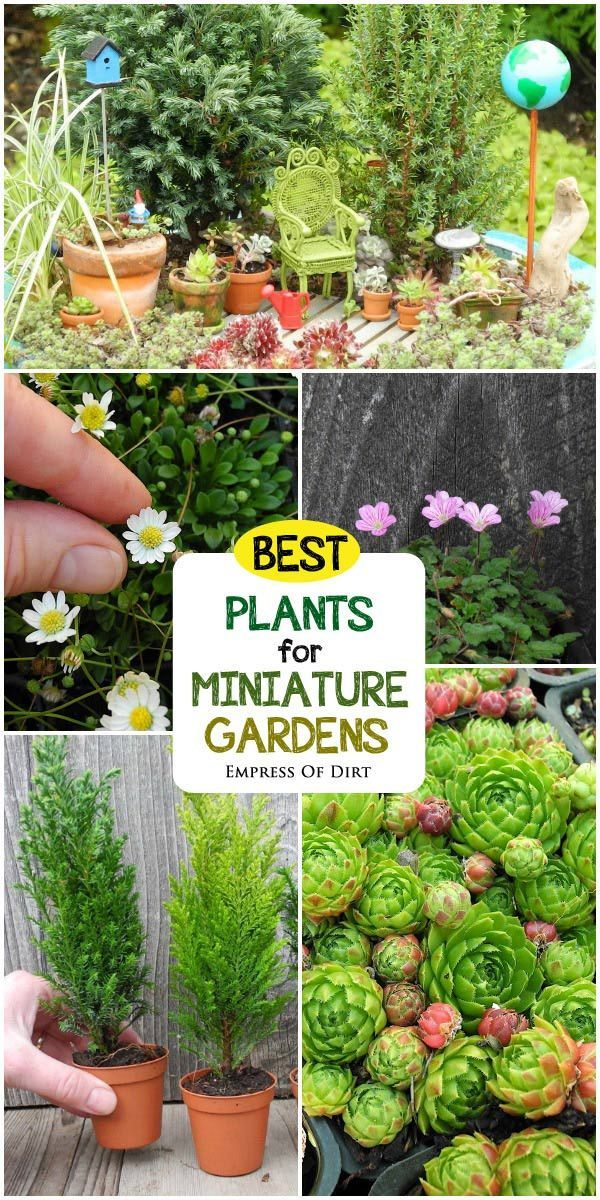 Want to create a miniature garden with living plants? This guide by expert Janit Calvo has all the information and resources you
