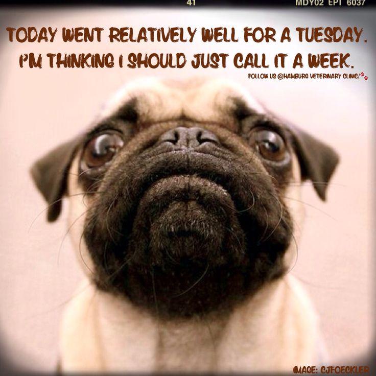 Happy Wednesday Pug Meme