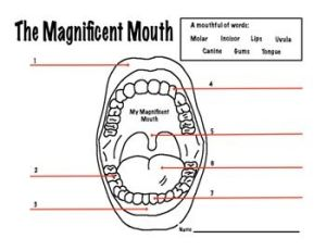 1000 images about TEETH on Pinterest
