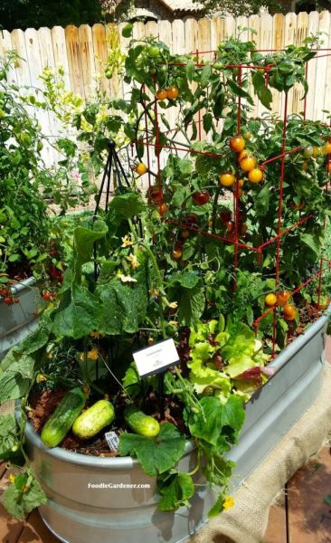 indoor vegetable garden ideas 25+ best Container vegetable gardening ideas on Pinterest