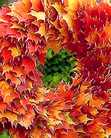 1000 Images About Preserve Flowers Amp Leaves On Pinterest