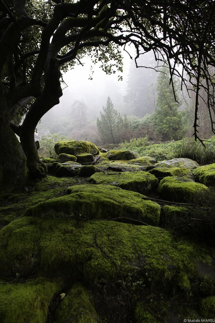 With the feeling of the cool dampness against my skin, and still greeness that hung in the air…