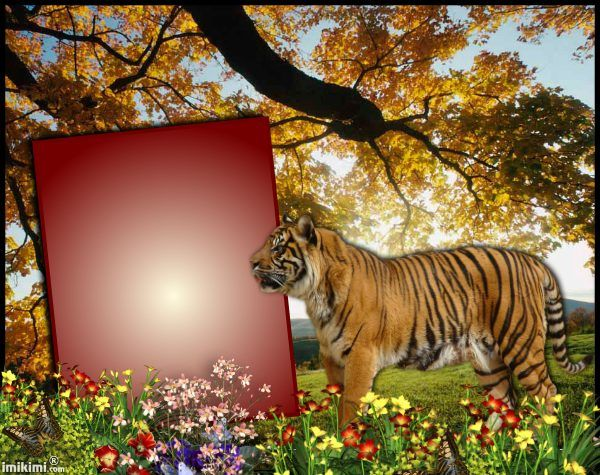 Tiger Picture Frames | Wallpapersjpg.com