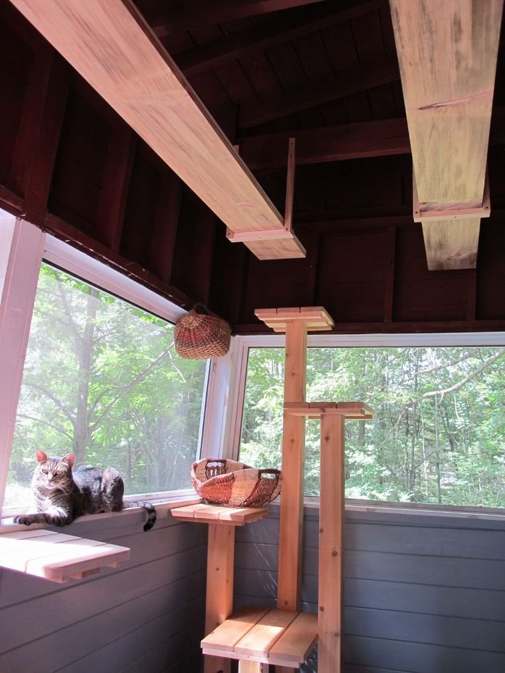 Catified Porch With Great Cat Highways Too Cats