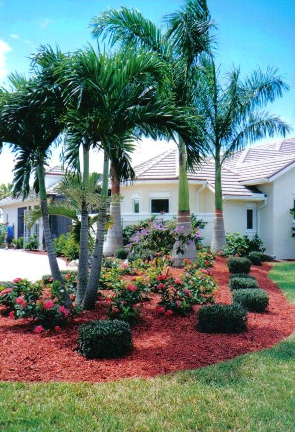 66 best images about Real Palm Trees Identification on ... on Palm Tree Backyard Ideas id=68066