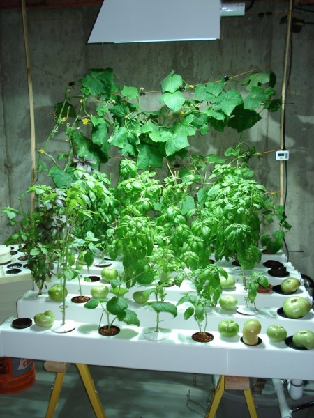 indoor gardening lights 17 Best images about Plant Grow Lights on Pinterest