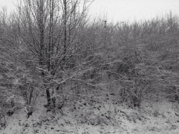 Lexington, KY snow 01/21/14 Photo by Alisha Lay ...