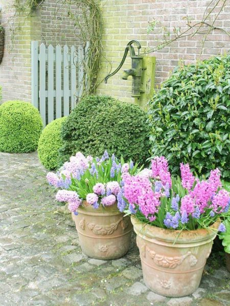 flowers for cottage style gardens 1862 best images about Rustic Cottage Style Gardens on