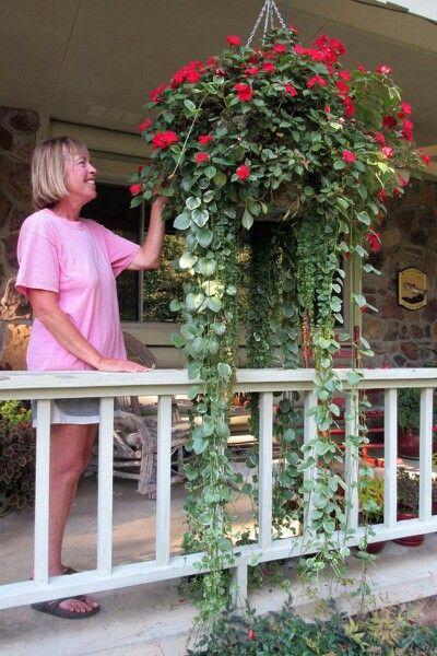 Impatiens Variegated Vinca Vine Container Gardening