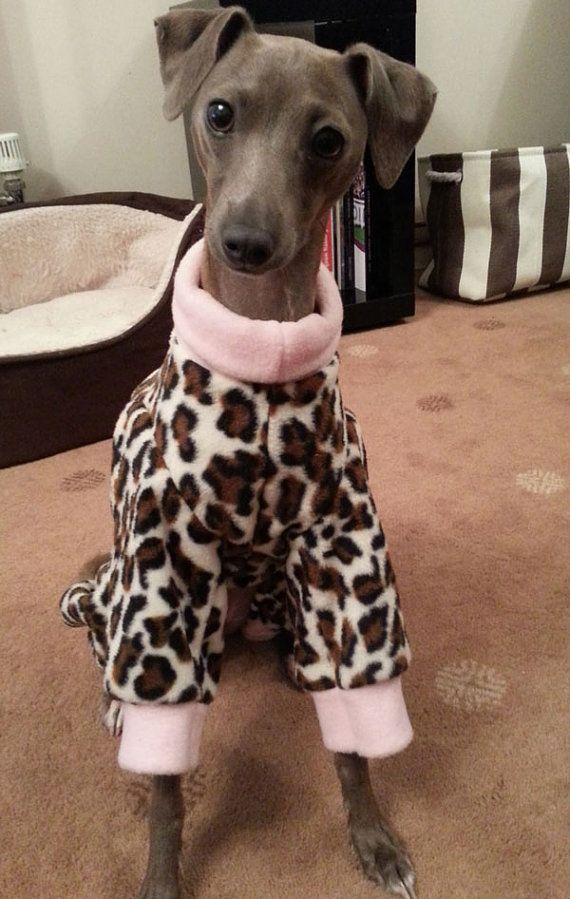 1000 Images About Italian Greyhounds In Pajamas On