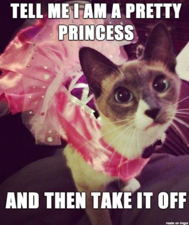 Image result for funny cats wearing costumes memes