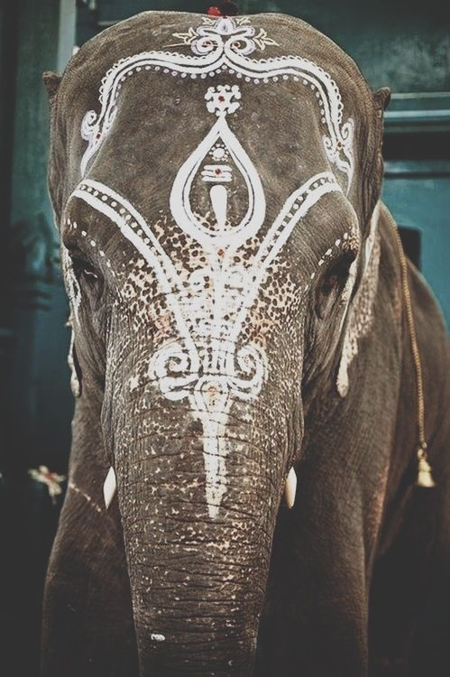 So, on the one hand, I think this elephante looks beautiful, and on the other, I wonder if it feels humiliated like my cat when I put her in a sweater for Christmas
