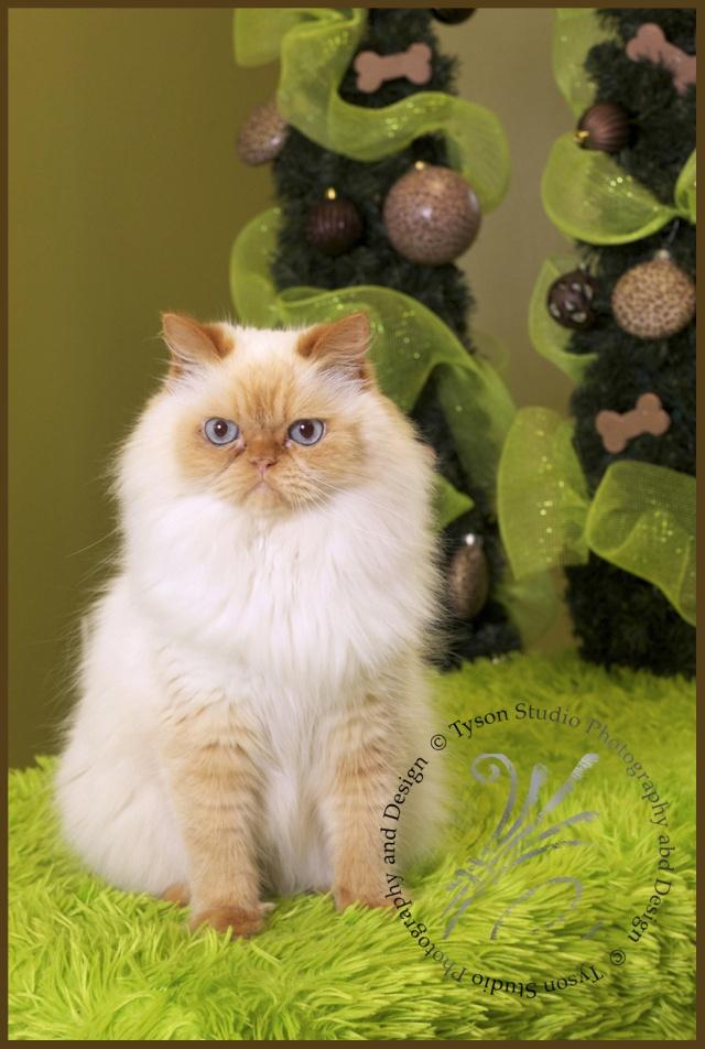 20 Best Images About Pet Portrait Fundraiser Inspiration