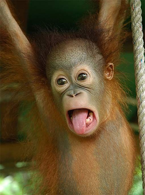 Baby Animals Funny Faces