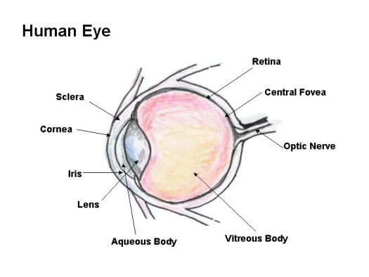 Labelled eye diagram ks2 periodic diagrams science human eye diagram to label ks2 periodic diagrams science ccuart Images