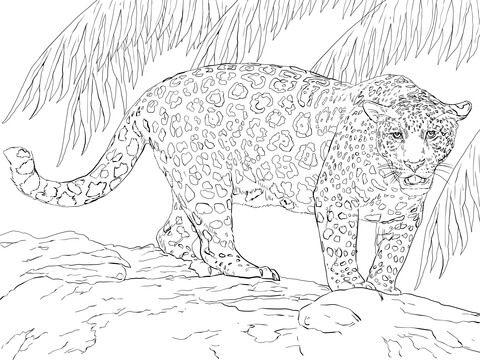 Best 25 Jaguar Colors Ideas On Pinterest
