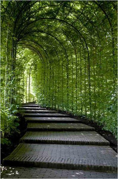 covered garden walkway covered garden path   Green   Pinterest   Gardens