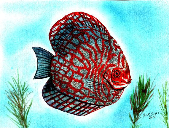 205 Best Images About Fish Paintings On Pinterest