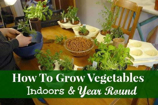 indoor gardening vegetables year round 1000+ images about DIY Grow vegetables indoor on Pinterest