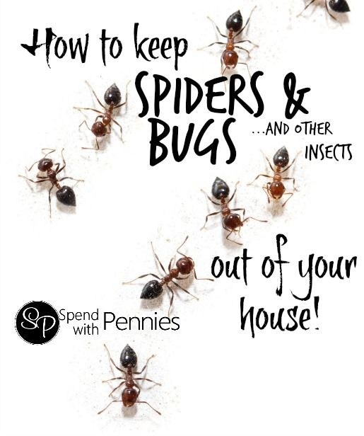 How to get rid of spiders, bugs & other common insects in ...