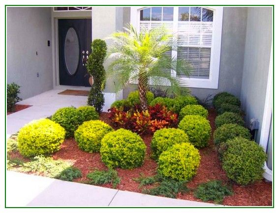 18 best images about landscaping with palm trees on ... on Palm Tree Backyard Ideas id=66034