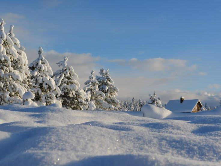 25+ Best Ideas About Snow Forest On Pinterest