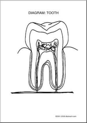 Diagram: Tooth (unlabeled)  Label the parts of the tooth