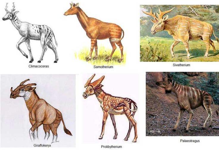 Image result for Giraffokeryx