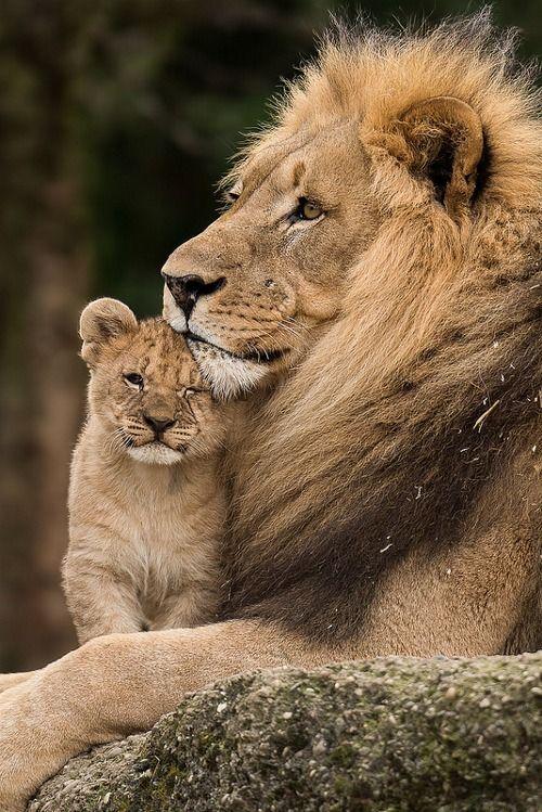 Lion And Cub By Oldgear Animal Kingdom Pinterest