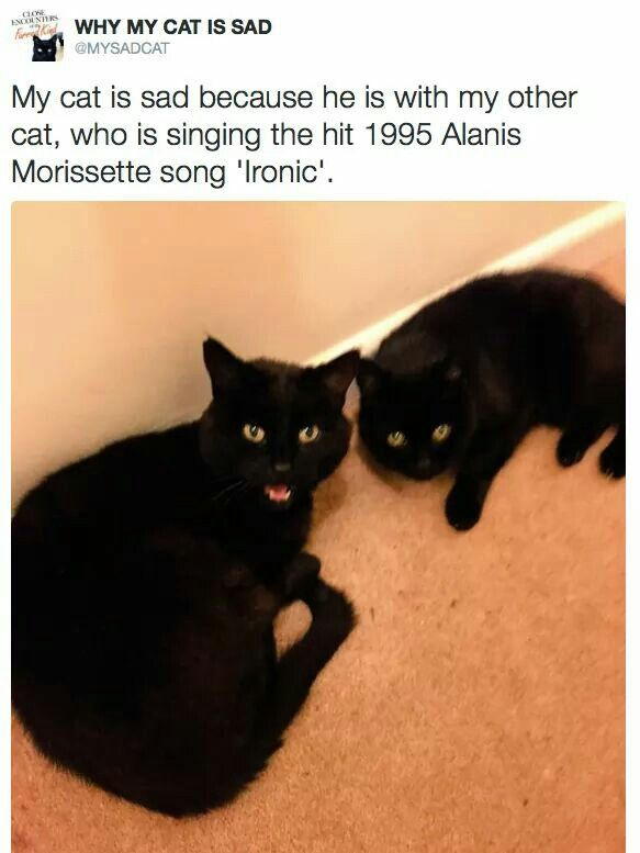 141 Best Images About Why My Cat Is Sad On Pinterest