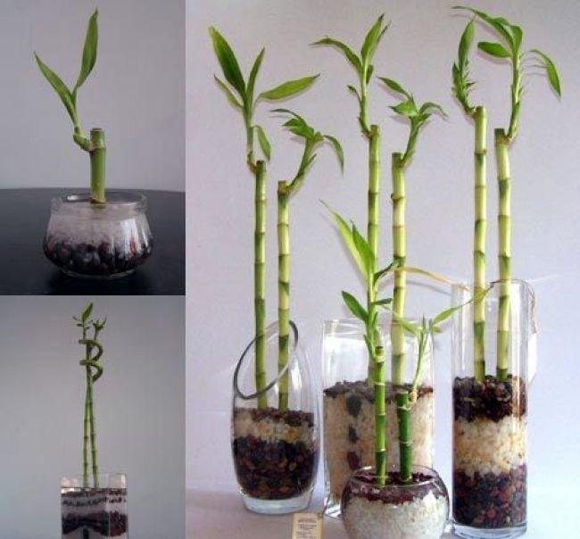 Resultado de imagen de decoracion bambu