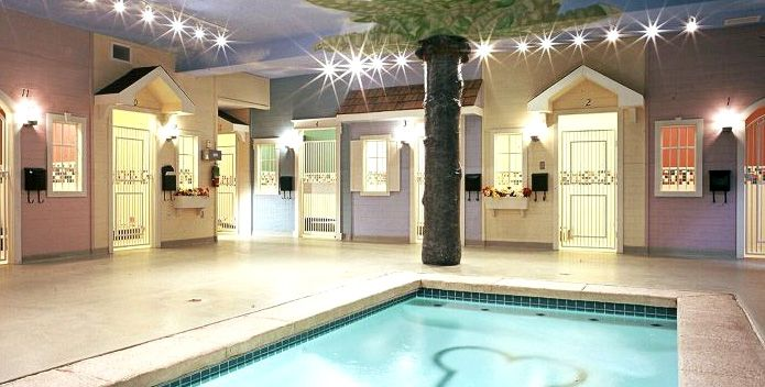 Animal Hospital With A Therapy Pool Surrounded By Luxury