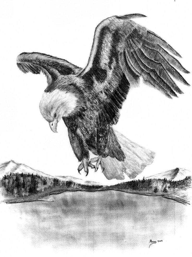 drawings of american bald eagles | Charcoal Drawing ...