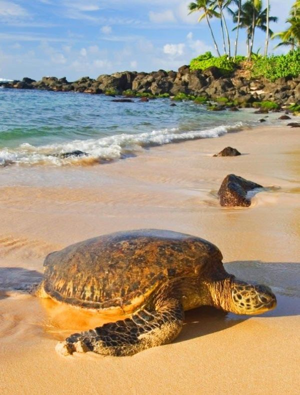 1000+ images about Things to do and eat in Oahu..... Aloha ...