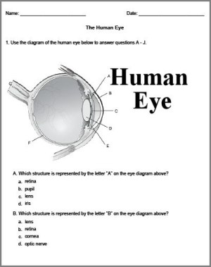 17 Best images about Eye on Pinterest | Homeschool, Neuroscience and Human anatomy