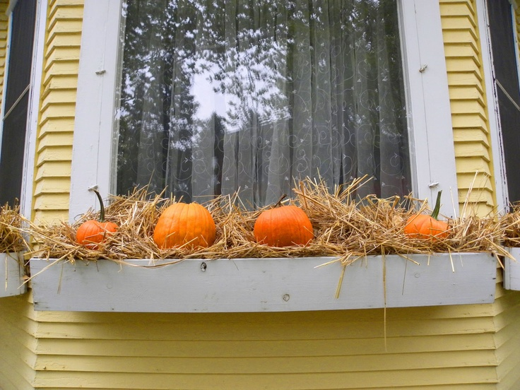 10 images about window box ideas on pinterest halloween on sweet dreams for your home plants decoration precautions and options id=77504