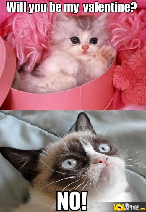 Angry Cat Valentines Day