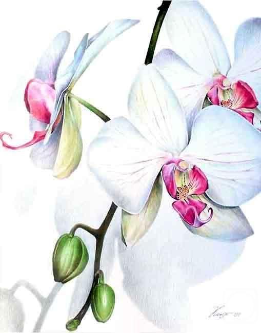 орхидея рисунок карандашом - Поиск в Google | Батик ...