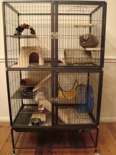 17 Best Ideas About Ferret Cage On Pinterest Small