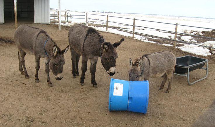 1000 Images About Horse Toys Amp Enrichment Ideas On