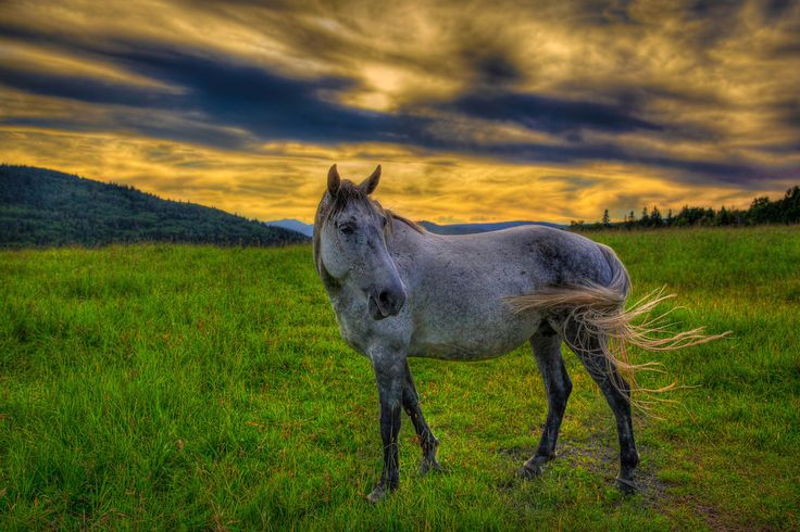 This beautiful horse loves getting their picture taken… #travel #photography