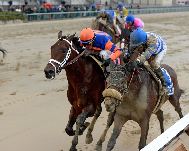 1000+ Images About 2016 Derby Contenders On Pinterest