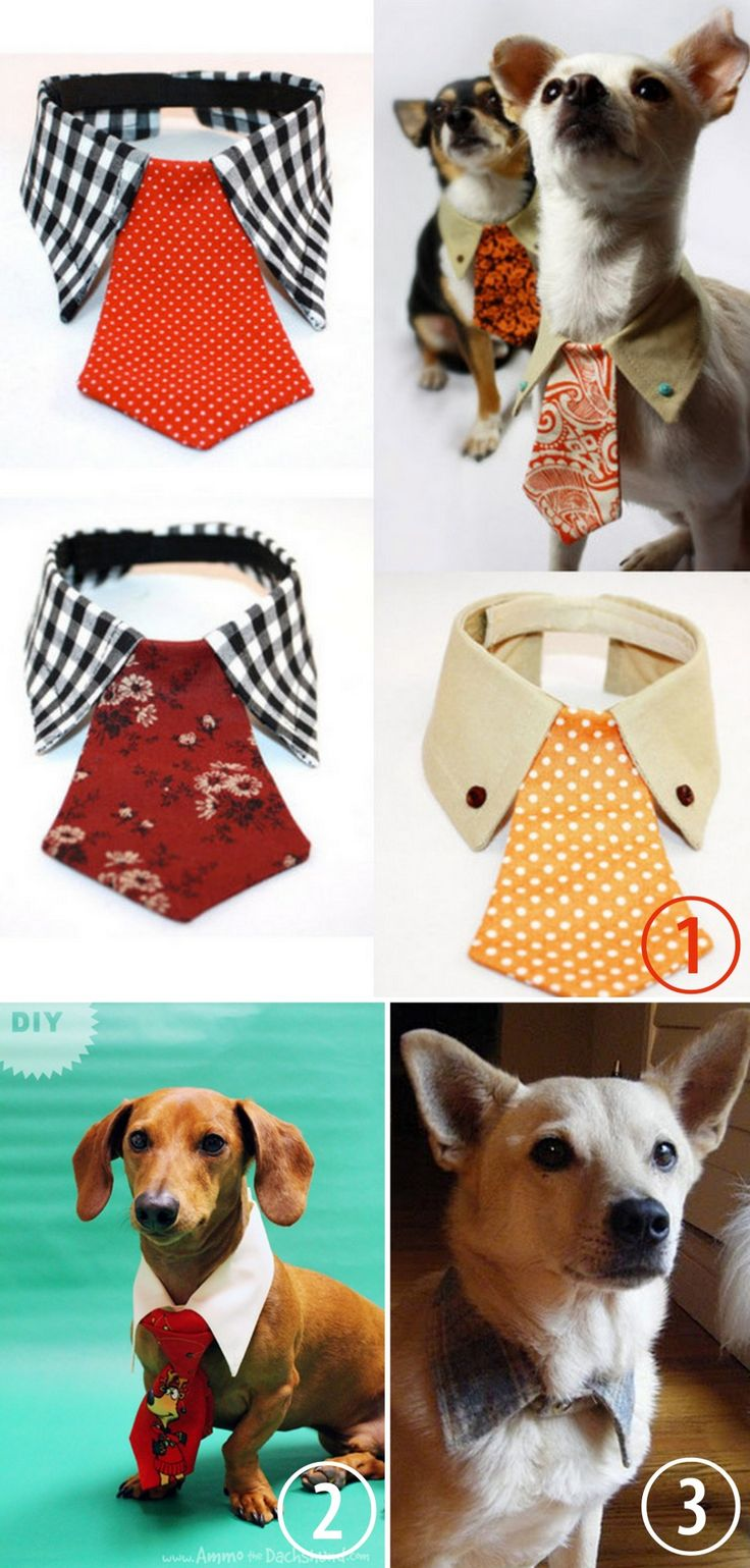 Diy or buy dog tie and collar for more pet diy gift