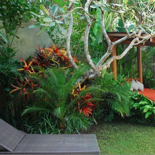 tropical garden design Best 25+ Tropical garden design ideas only on Pinterest
