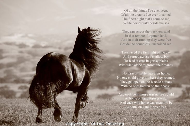 Images Of Horses On The Beach With Sayings It Would