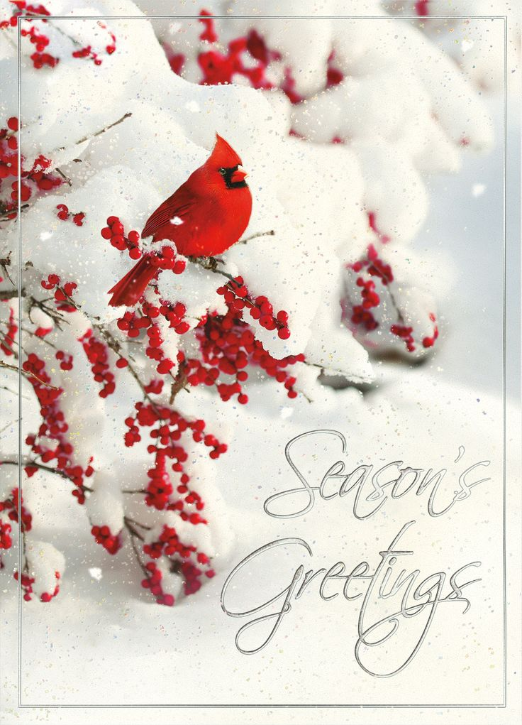 1000 Images About Cardinal Christmas Cards On Pinterest