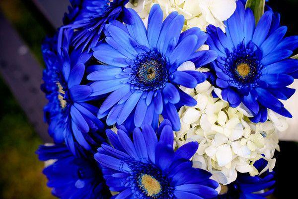 Dark Blue Daisy For Head Arrangement