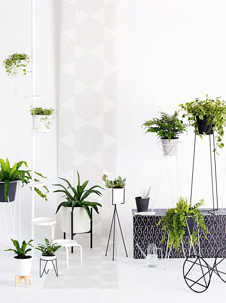Hanging Plant Stand Indoor - WoodWorking Projects & Plans on Hanging Plants Stand Design  id=53811