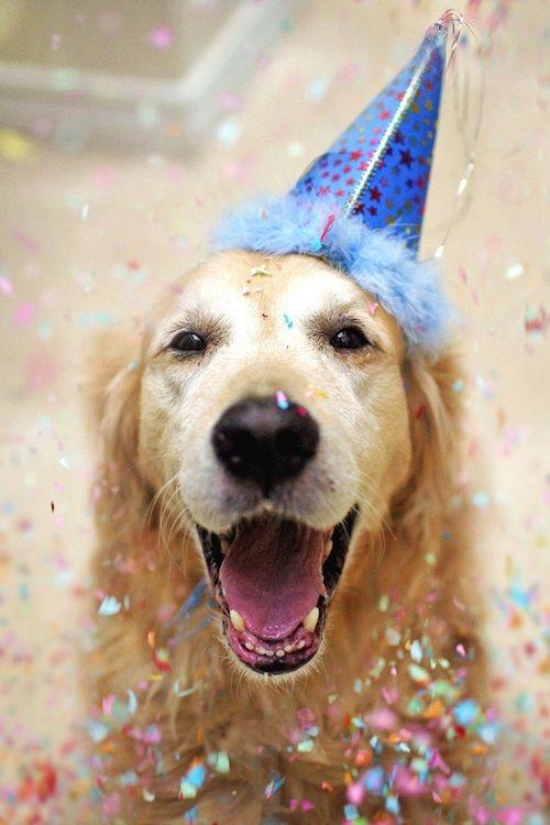 25 Best Ideas About Happy Birthday Dog On Pinterest