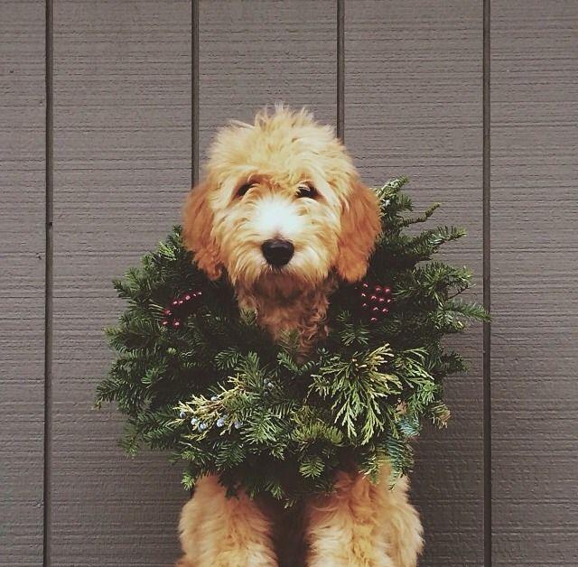 Merry Fur-mus